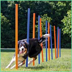 Udstyr til hunde agility