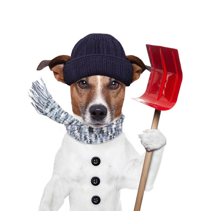 Den kolde tid - Hundeudstyr til kulden
