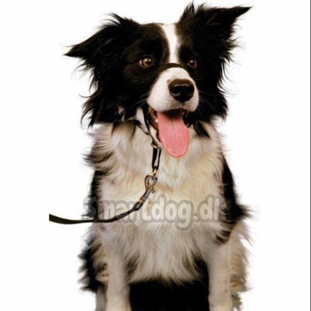 Træningshalsbånd til hunde