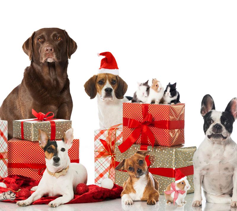 Julegave til hunde - Køb din julegave her