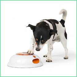 Aktiveringslegetøj til hunde
