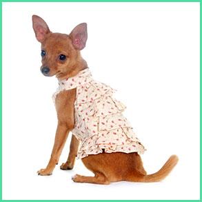 T-shirts & Kjoler til hunde