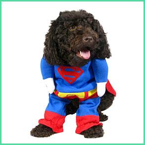 Udklædning & kostumer til hunde