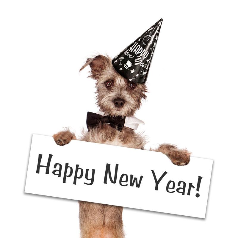 Nytår med hunden - Giv din hund et godt nytår
