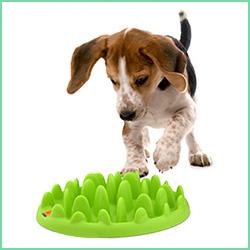 Spis Langsomt hundeskåle
