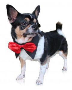Rød Hunde Butterfly FashionStar