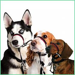 Anti træk hundeseler