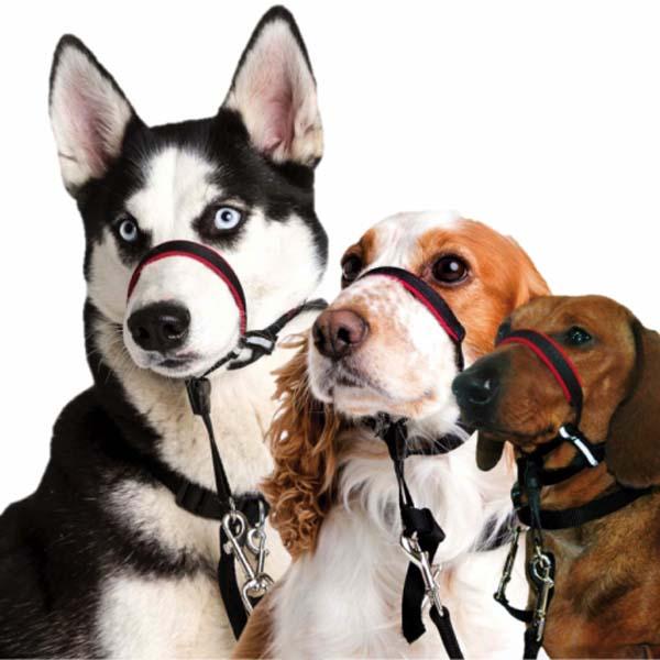 Anti træk halsbånd til hunde